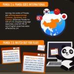 google panda infographic